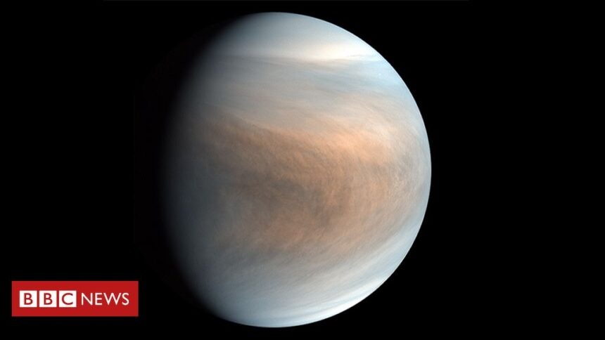 Is there life floating in the clouds of Venus?