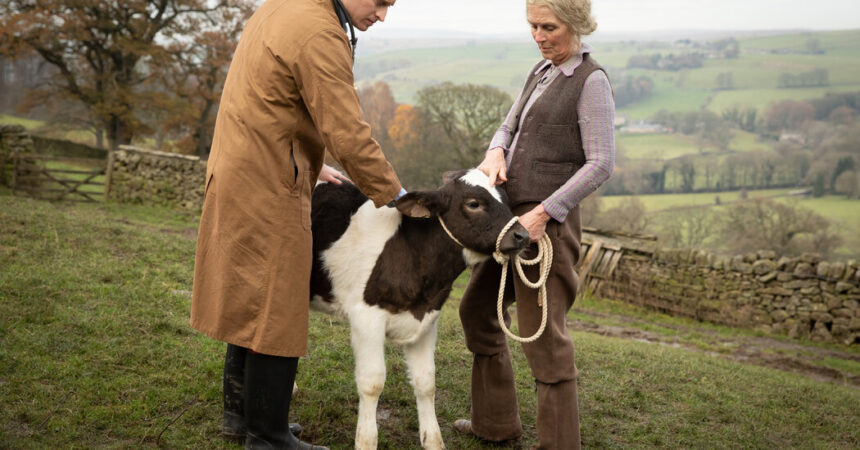 'All Creatures Great and Small' Rehabilitates Cows and Soothes Souls